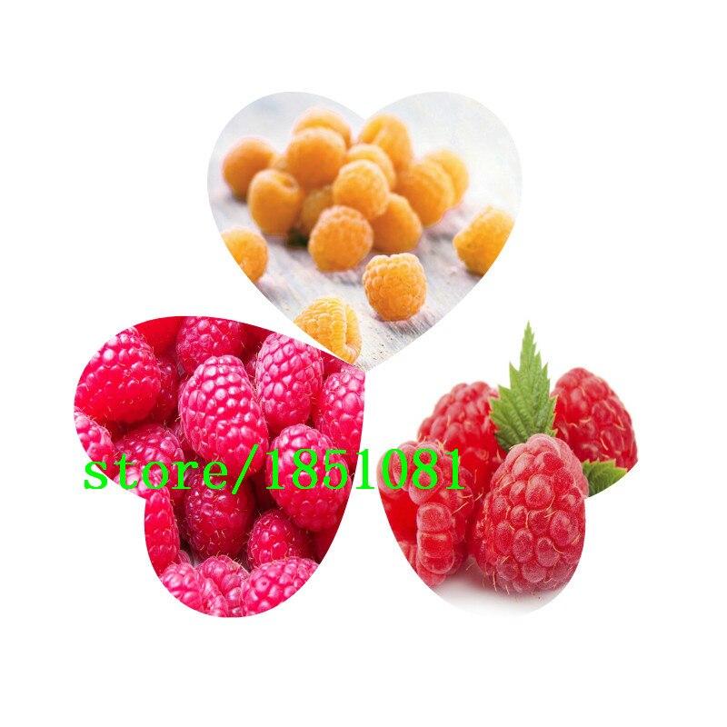 100 четыре различных сортов косточек малины! Разнообразие выбора вкусные фрукты! Съедобные! Легко расти! Главная Садоводство DIY