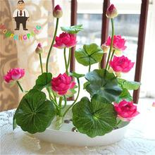 Bowl Lotus Seeds Hydroponic Flower Seeds Bonsai Plants Water Lily Seeds For Mini Garden Perennial Flowers Semillas 5 Pcs / Bag .