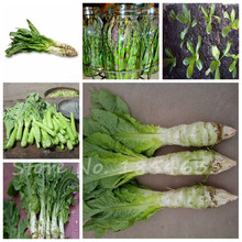 Loss Promotion!10 Pcs/Pack Italian Lettuce Seeds good taste , easy to grow, great salad choice ,DIY Home seeds vegetables