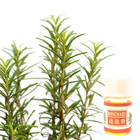 Rosemary Aromatherapy Essential Oil Special Water-soluble Flavor Used for Diffuser Humidifier Essential Oil
