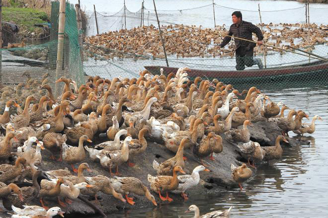 10 м забор сетка Зеленый Цвет безопасности птицы и домашних животных простой Разведения Чистой рыболовная сеть Садоводство net
