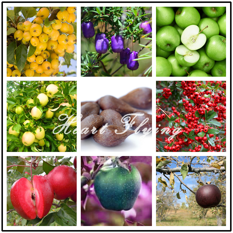 30 Pcs Apple Seeds rare Christmas Apple Tree Fruit Seeds Bonsai big strawberry DIY farm home garden