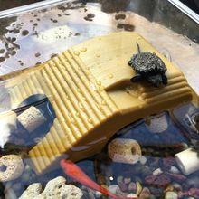 1pc Reptile Platform Turtle Basking Aquarium Amphibian Aquatic Climb Tank Staircase