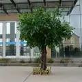 Kunstmatige microcarpa kunstmatige grote boom Nep bomen Grote plant decoratie Hotel lobby samenstelling