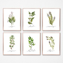 Herb Collection Wall Art Canvas Posters Painting Oregano Sage Rosemary Basil Thyme Watercolor Wall Picture Print Kitchen Decor(China)