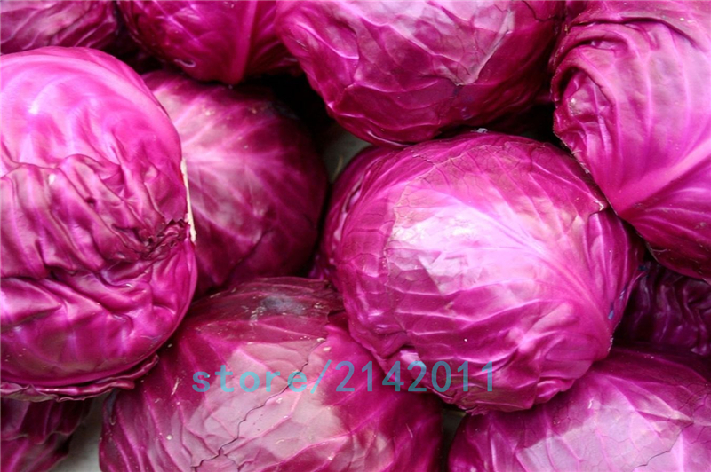 200pcs/bag purple cabbage seeds,mini cabbage,seeds cabbage,organic fruit vegetable seeds,bonsai potted plant for home garden