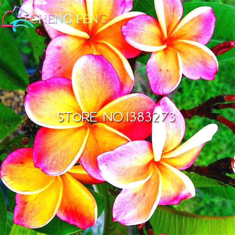 Air Bonsai Sale Online