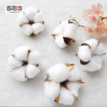 Natural Dried Flowers Plants cotton flowers Head For Home Wedding Decoration Fake Decor 6pcs