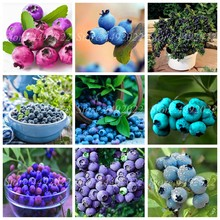 Imported BlueBerry Bonsai 500 pcs Fruit Tree Highbush Blueberries DIY Countyard Potted Plants for Home & Garden Easy to Grow(China)