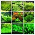 Hot Sale 1000pcs New aquarium grass seeds (mix) water aquatic plant seeds family easy plant seeds for decorate the aquarium