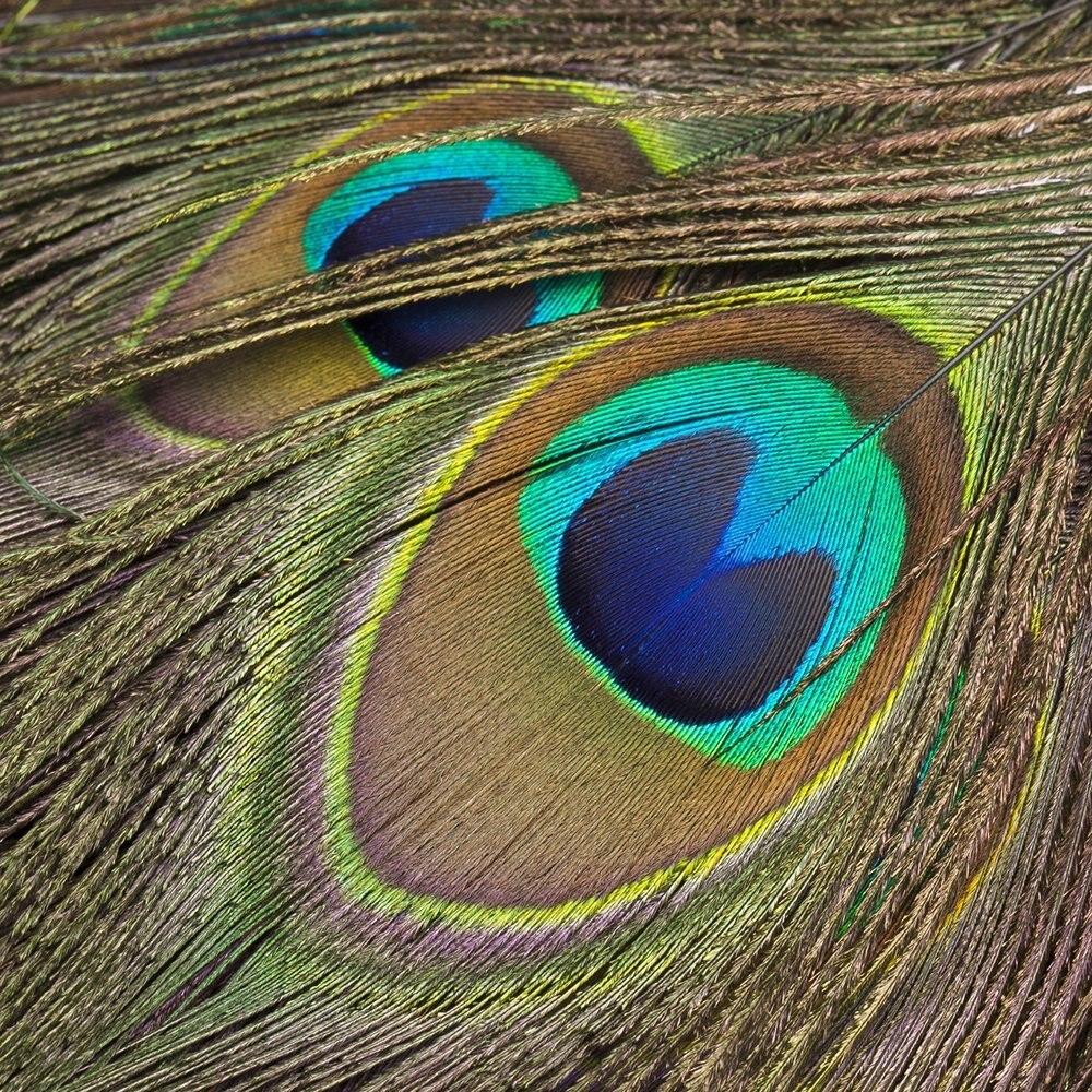Venta al por mayor 10 metros plumas de pavo real Natural adornos alrededor de 15CM de ancho flecos con cinta de satén costura artesanías decoración de disfraces-in Pluma from Hogar y Mascotas    2