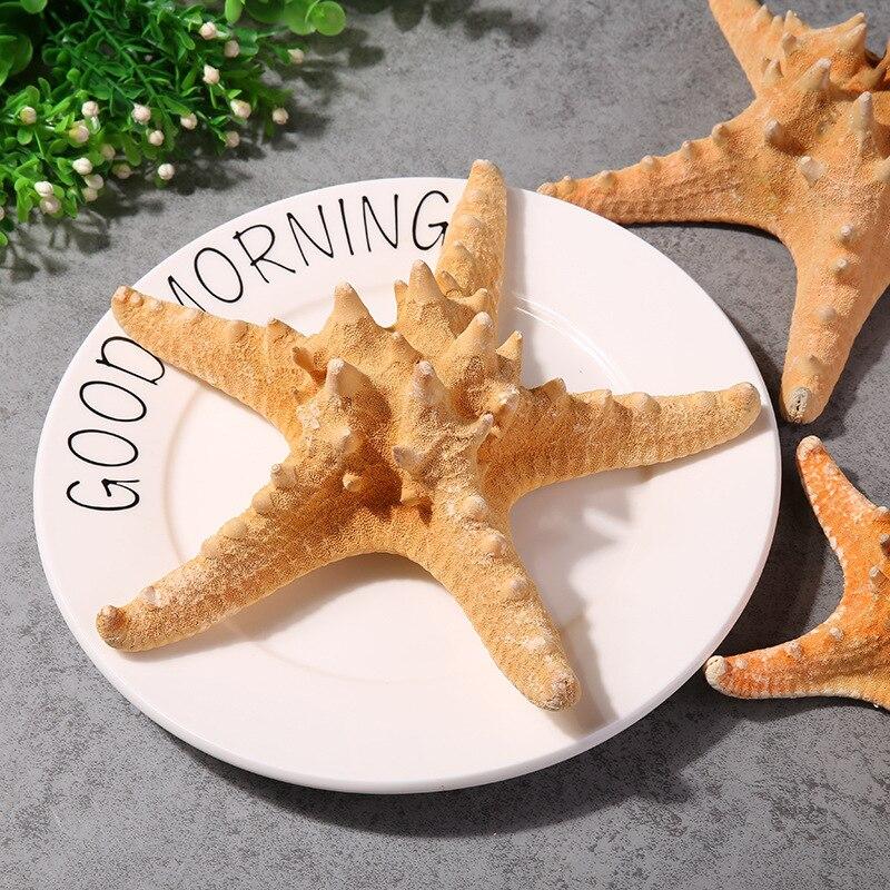 3pcs Natural Mini - Starfish Handicraft Ornaments Small Landscape Aquarium Decoration Sea Star Fish