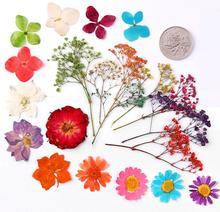100 pcs Mixed Flores Secas Pressionado Imprensa Enchimento Para Resina Epóxi Pendente Colar de Jóias Fazendo Artesanato DIY Acessórios