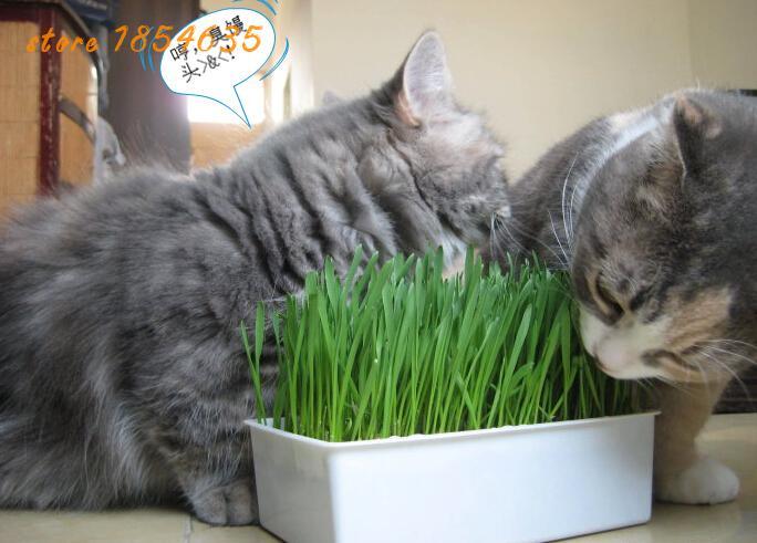 Запах мяты и коты