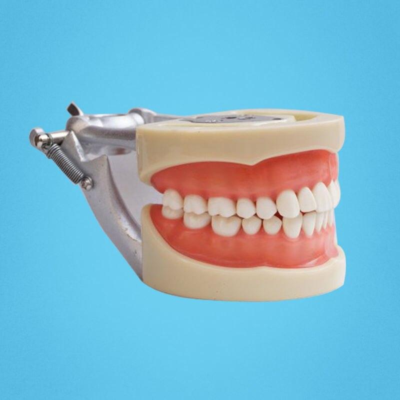 Darmowa wysyłka zęby model nauczania Dental miękkie dziąsła 200 typu H zdejmowane zęby w Wybielanie zębów od Uroda i zdrowie na  Grupa 3