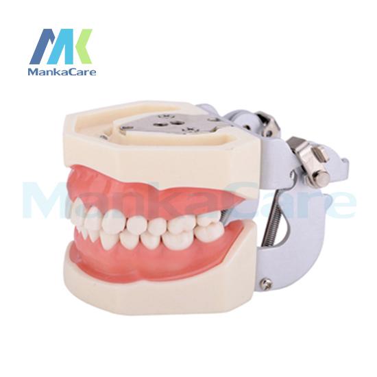 Manka Cuidar-Modelo Padrão/28 pcsTooth/Goma Macia/Parafuso fixo/FE Articulador Oral Dentes Modelo Modelo de dente