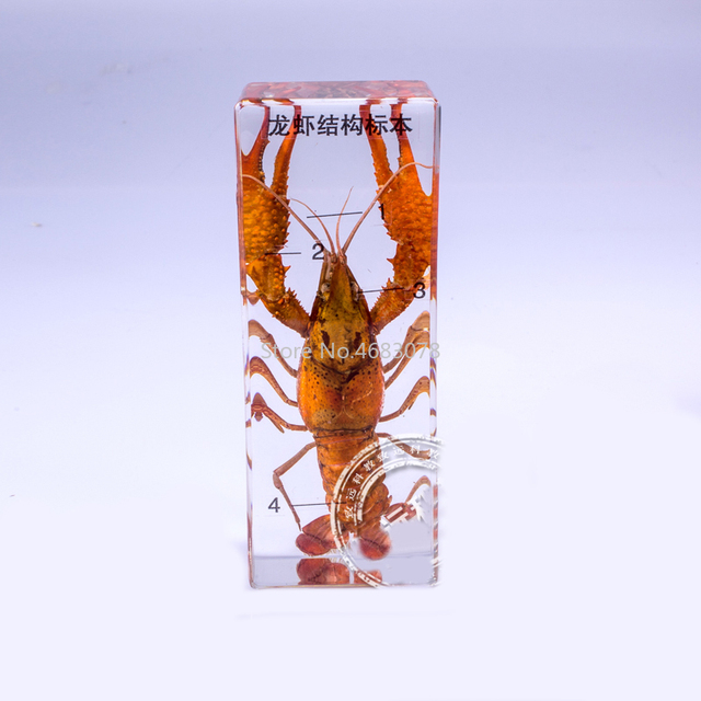 Brand New lobster specimen In clear Lucite Educational Explore Instrument 11x4.5x2.8cm