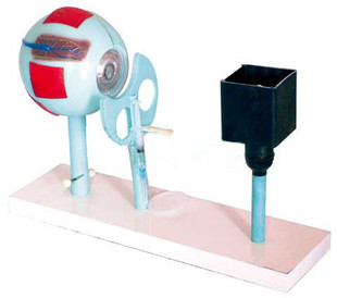 Eye instrument model Eye imaging Demo free shipping