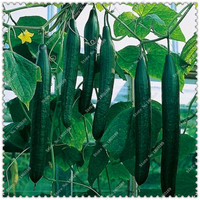 50pcs/bag Cucumber seeds Organic healthy Russian Vegetable Seeds,bonsai plant home garden