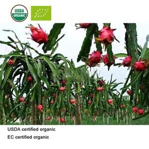 Image 2 - USDA and EC Certified Organic Pitaya Juice Powder Red Dragon Fruit Juice Powder