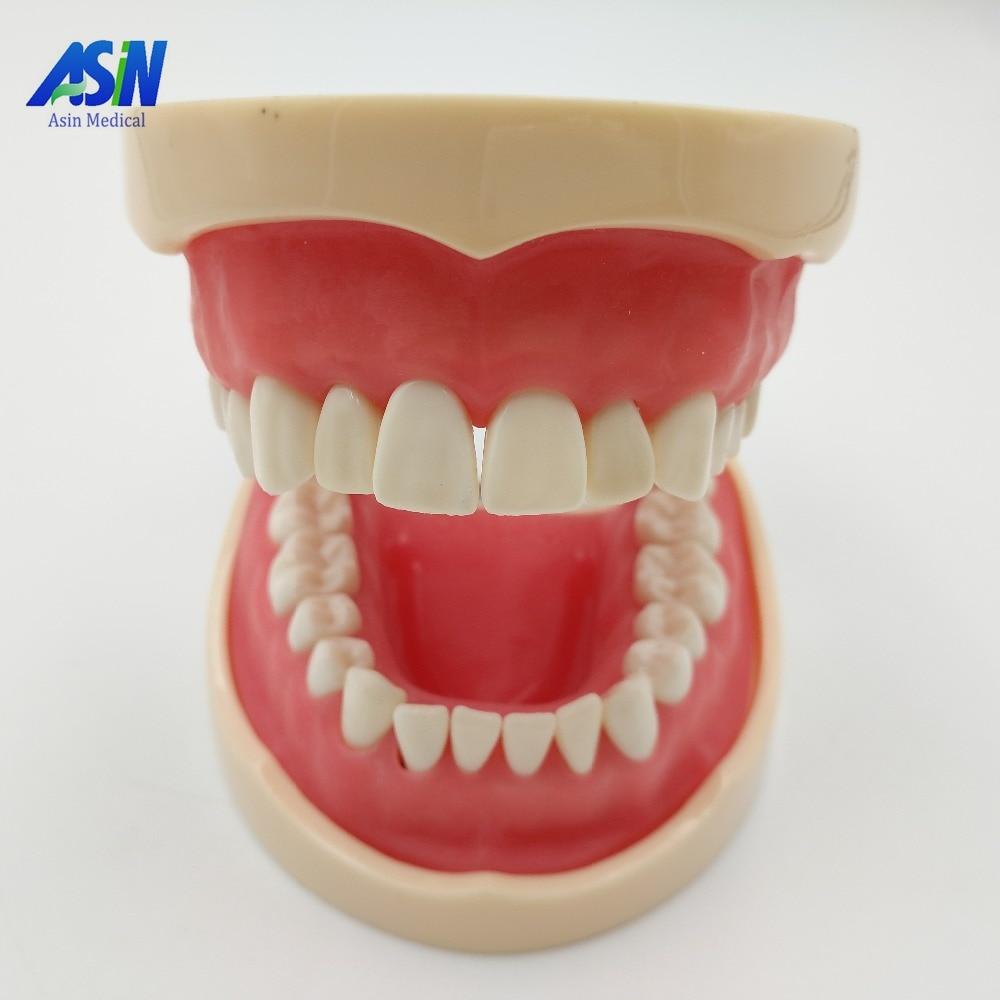 2016 New Teeth Teaching Model Dental Soft gingiva 200H Type Removable Teeth new arrival soft gingival dental mold removable teeth may gingival oral teaching model gingival practice teeth mold teeth model
