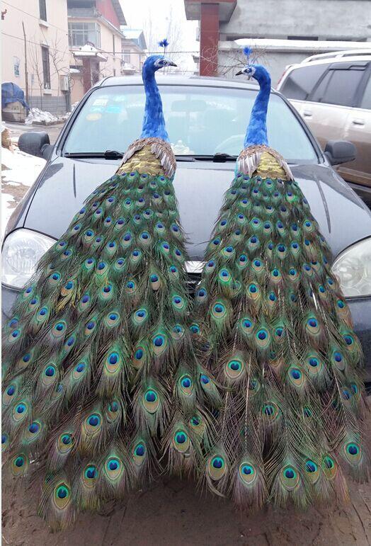 В реальной жизни toy птицы большие 150 см Красивые перья Павлин модель одна пара павлины ремесленные сад, вечерние украшения h0967