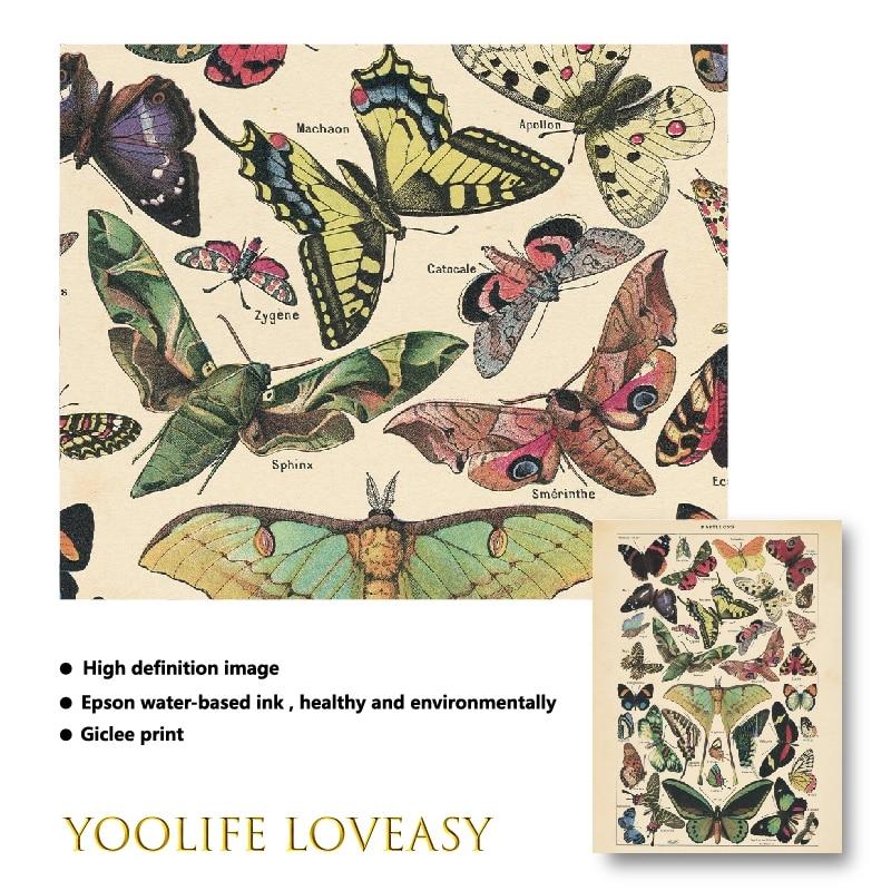 Antique Nature Art Print VINTAGE NATURE PRINT Antique Insect Print Butterfly
