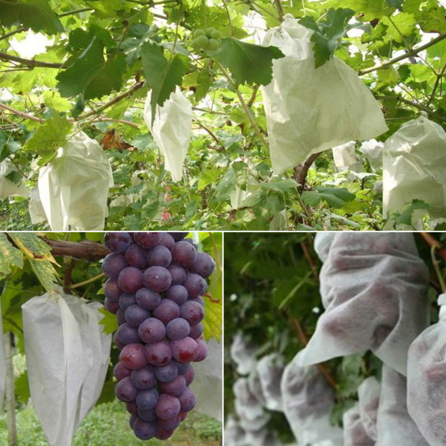 100pcs Grape Protection Bag Anti Bird Moisture Insect Net Vegetable Fruit Protect Breeding