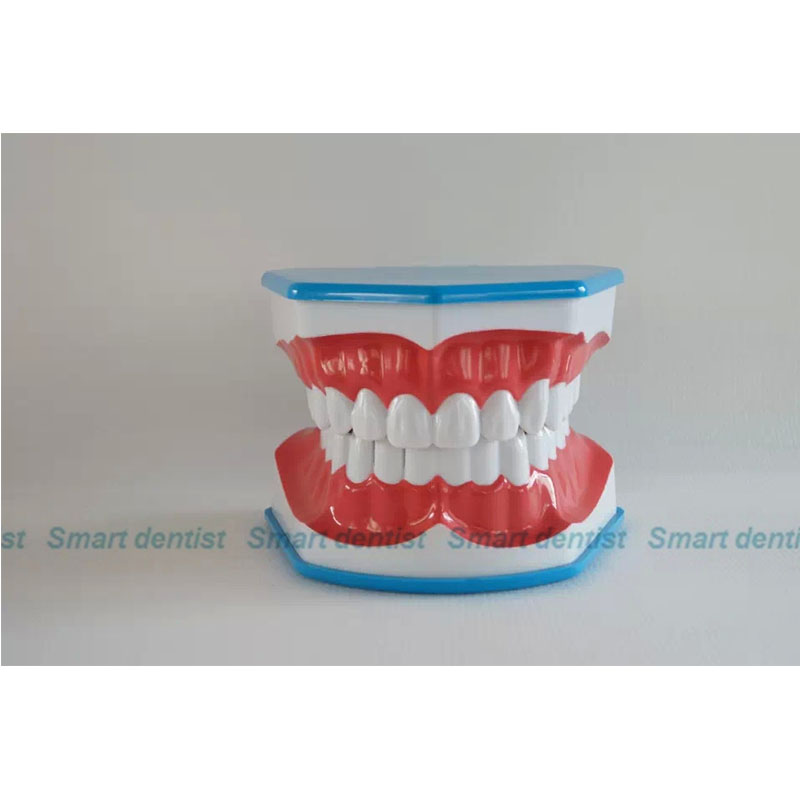 2016 CMAM-DN012 Plastic 3 Times Enlarged of Teeth Brushing Model for Teeth Brush Practice2016 CMAM-DN012 Plastic 3 Times Enlarged of Teeth Brushing Model for Teeth Brush Practice