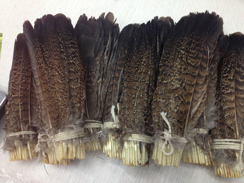 Wholesale Perfect  10pcs  High Quality Scare Natural Owl Tail Feathers 8-10inch/20-25cm  Decorative Diy