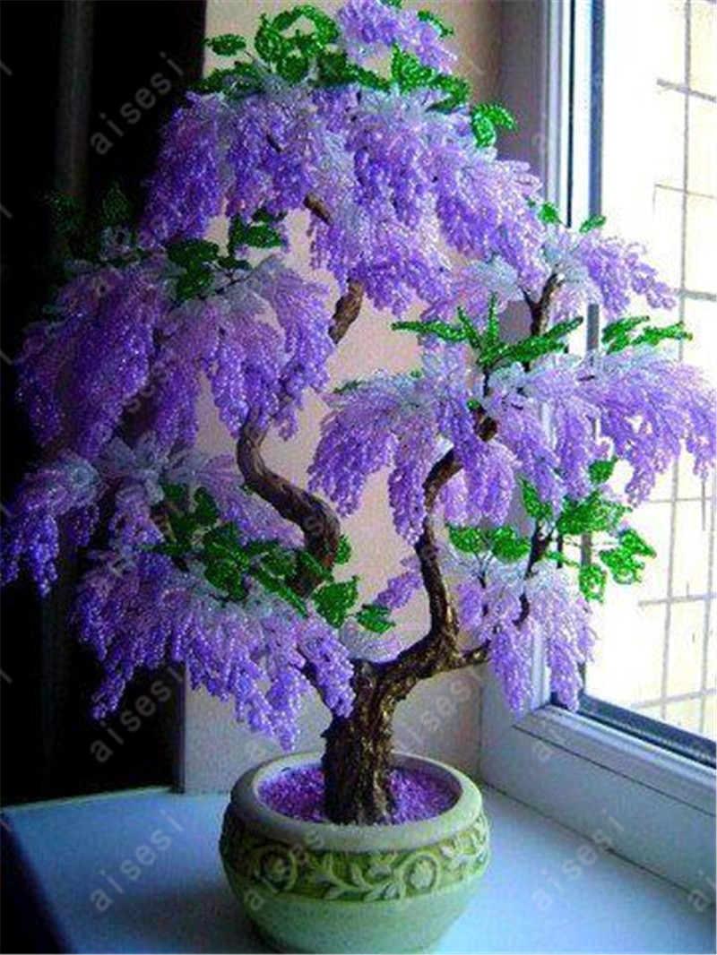 Wisteria Bonsai Flower Wisteria Tree Plant Perennial Flowers Climbing Growth For Home Garden 10 Pcs