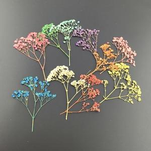 Image 2 - 10 stks/partij Gedroogde Bloem Takken Specimen Bladwijzers Materiaal DIY Card Pressed Flower Schilderijen Accessoires voor Party Decoratie