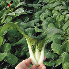 Bok Choy Cabbage seeds Pak Choi Chinese Vegetable mini cabbage seeds Organic Balcony bonsai Succulent vegetable seeds 200pcs/bag(China)