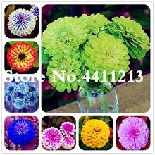 Free Shipping 100 Pcs Zinnia Flower Perennial Flowering Plants Potted Charming Chinese Flowers Bonsai Stunning Blooms Balcony(China)