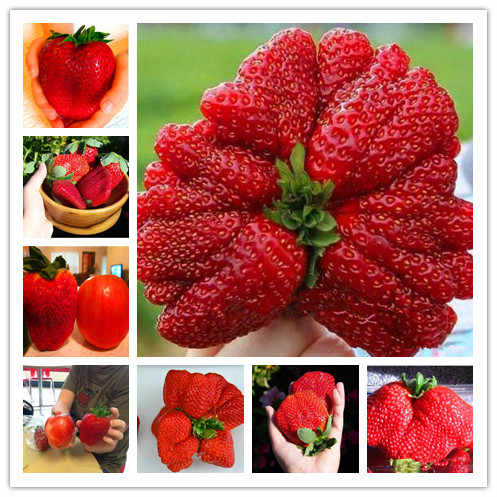 New store discount New 200pcs  100% Germination Super Giant big Strawberry Apple Size Home Garden Bonsai