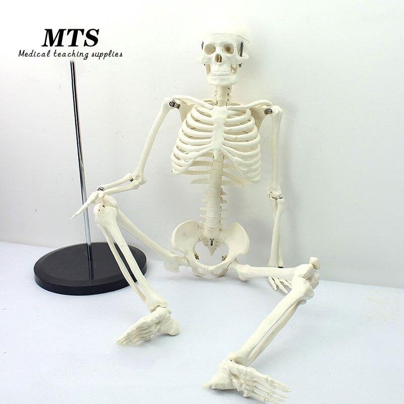 MTS 85 CM 1:1 modèle de squelette humain enseignement médical utilisation modèle d'os éducatif
