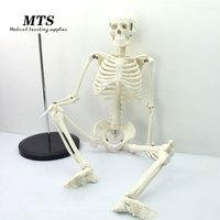 MTS 85CM 1:1 human skeleton model medical teaching use bone model educational