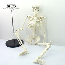 MTS 85CM human 1:1 skeleton model medical teaching use bone model educational 1 1 human anatomy skeleton foot joint function skeleton model medical teaching foot bone model with ligament traumatic pistol