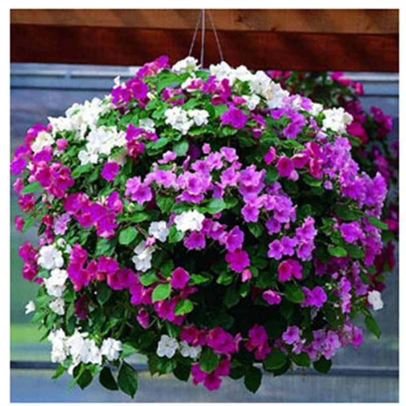 Online Get Cheap Wave Petunia Seeds -Aliexpress.com