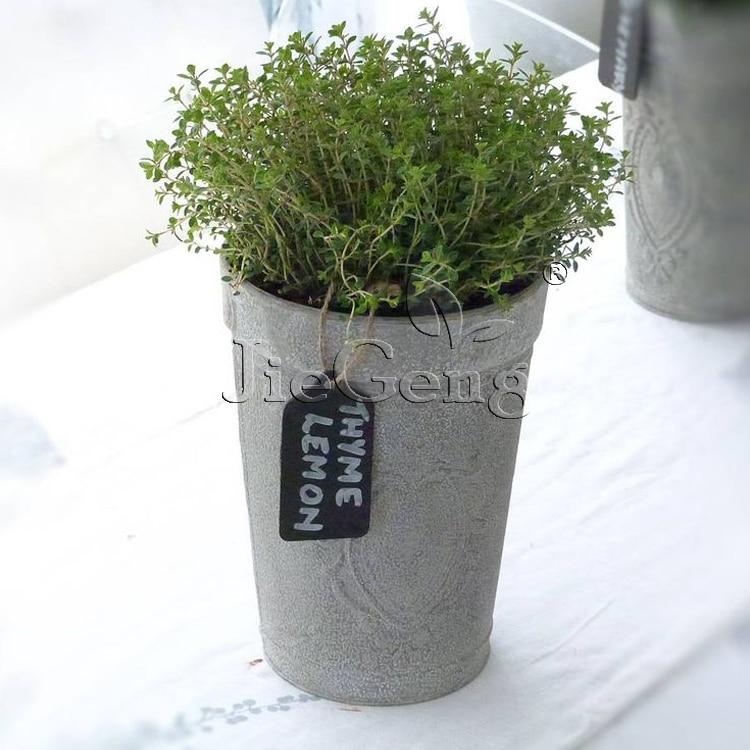 Lemon Thyme * 1 Gram 4200's (Pcs) * Thymus Citriodorus * Thymus vulgaris * Perennial Evergreen Leaves Herb Flower