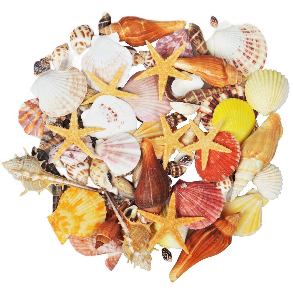 100PCS Mixed Ocean Sea Shells Wedding Decor Beach Theme Party, Seashells Home Decorations, Fish Tank,Candle Making
