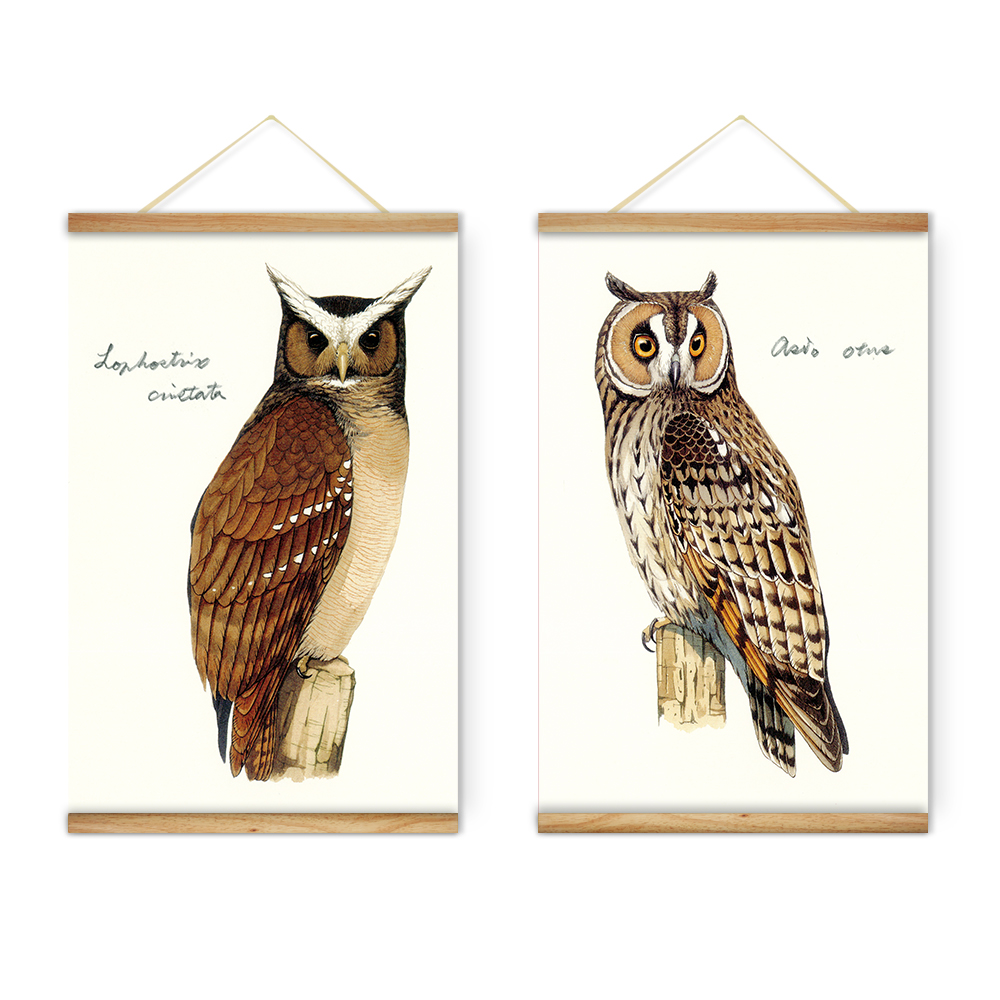 Compare Prices On Brown Owl Pictures Online Shopping Buy