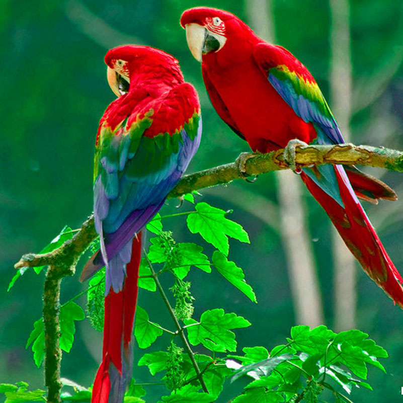 Beautiful parrot 3d embroidery diamond painting animals hobby beautiful parrot 3d embroidery diamond painting animals hobby picture of landscape mosaic square rhinestones cross stitch cq53 fandeluxe Gallery