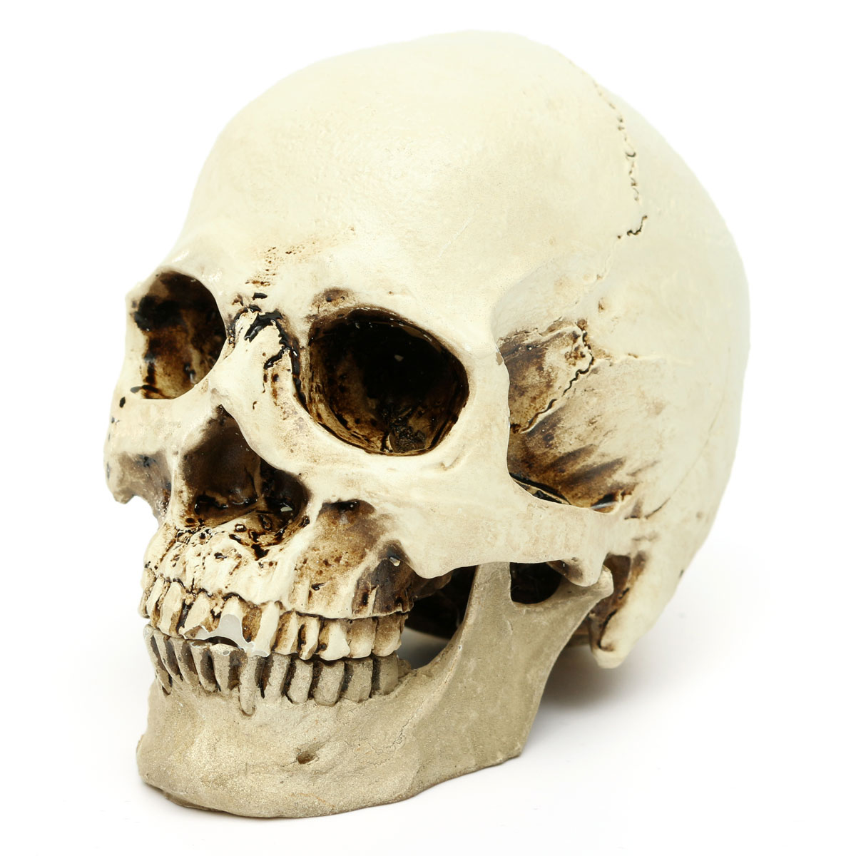 Aliexpress.com : Buy New Model Gifts Resin White Head Skull Halloween Props  Small Human Skull Replica Haunted House Room Escape Horrible Supplies from  ...