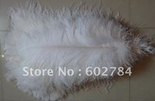 EMS Free Shipping 50pcs/lot 18-20 inches 45-50cm white ostrich feather ostrich plumes ostrich plumage