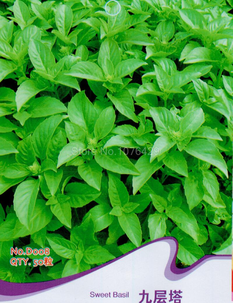 how to store cut basil leaves