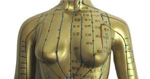 Image 5 - Modèle Meridian modèle dacupuncture humaine pour femme 48cm, 1 pièce