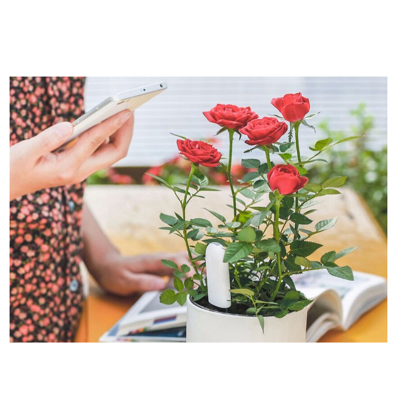 Image 5 - Xiaomi international version flower monitor garden plants gross water soil nutrient smart detection growing diary HHCC flora APP-in Smart Remote Control from Consumer Electronics