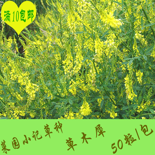10 yuan shipping flowers and alfalfa forage seed sweet clover seed 10 yuan shipping flowers and alfalfa forage seed sweet clover seed favorite rabbit feed pigs and mightylinksfo