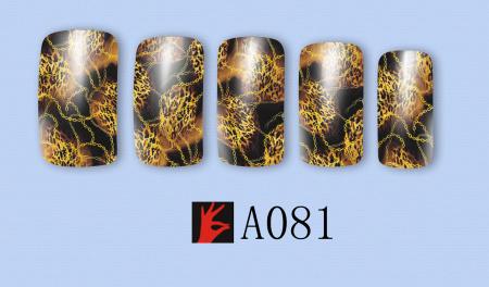 A081(1)